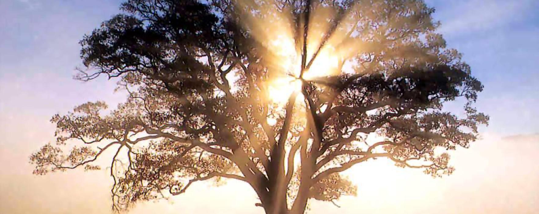 America_-_oak_tree_in_new_england_sunrise-1764x700