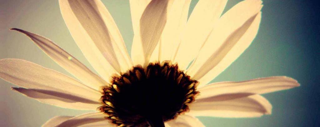 324-golden-petals-1764x700