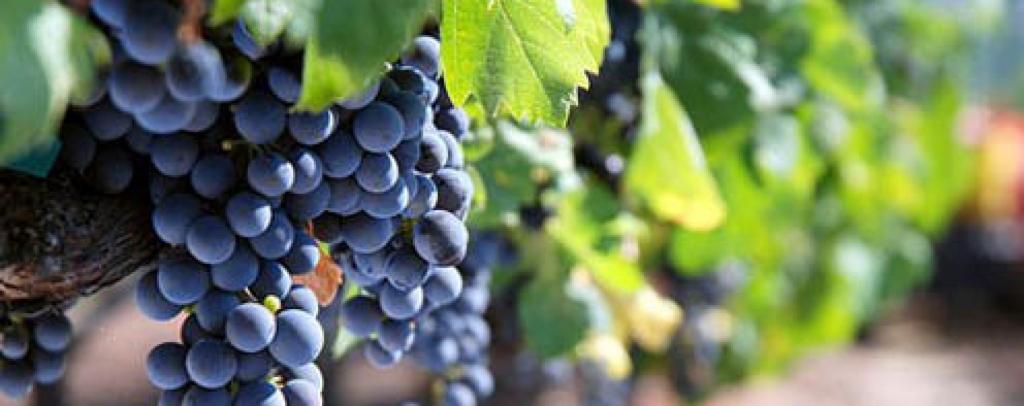 加州佳釀:紅酒及葡萄園-1764x700